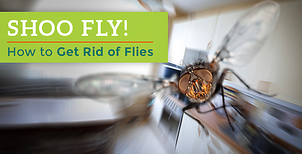 Fly Control in Hyderabad - Flies Pest Control Services in ...